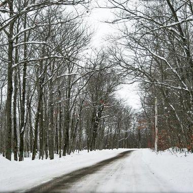 Enchanted dirt road