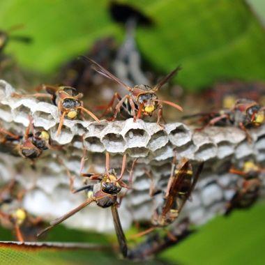 Wasps 3