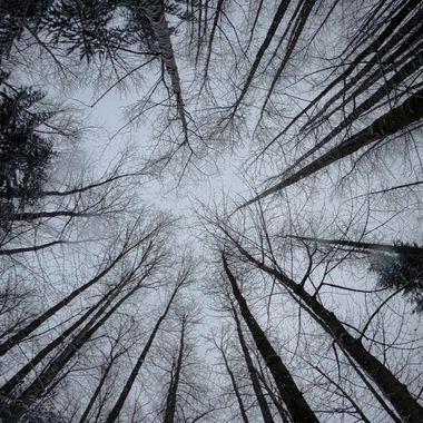 Looking up at the sky from within the forest
