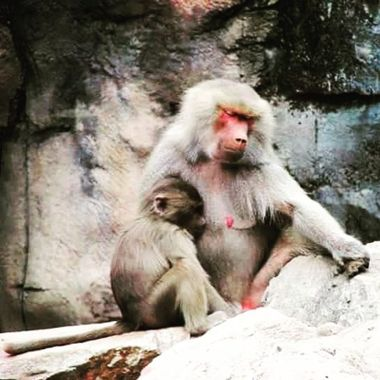 A mother's love will always be the most powerful element across all creatures and beings.  Adelaide Zoo, South Australia
