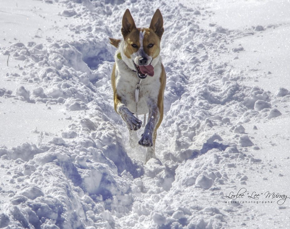 A romp around Willow Lake and the deep snow made a great play day for Dot as we strolled and took...