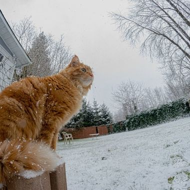 A busy cat constantly moving makes it rare to capture him standing still