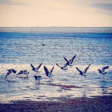 Kingscote, South Australia  [Kangaroo Island]