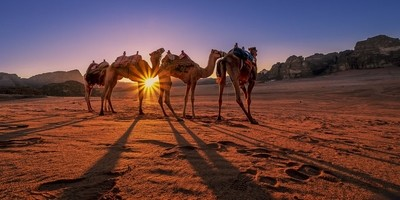 Sunstar and Camels