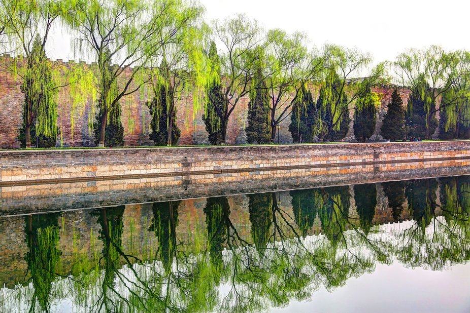 These trees make a great reflection on a pool in Beijing.