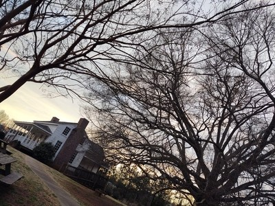 House Beside 300-year old Willow Oak Tree