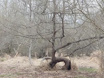 Bent Tree Off Beaten Path