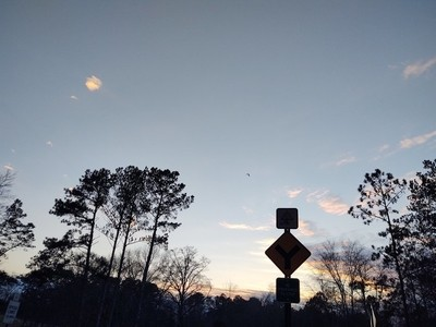 Signs with Bird in the Sky