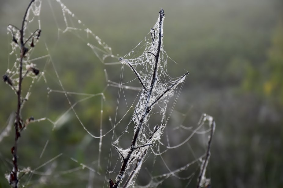 I created this nature photo of a dew covered spiderweb in mid march of 2019 at the Circle B Bar R...