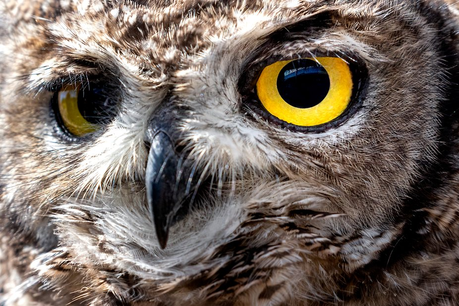 Eagle Encounters is a wildlife rehabilitation, conservation, education and eco-tourism centre ...