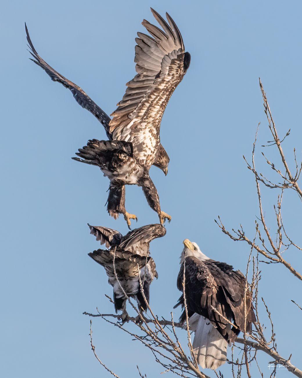 Incoming II - Eagle Landing