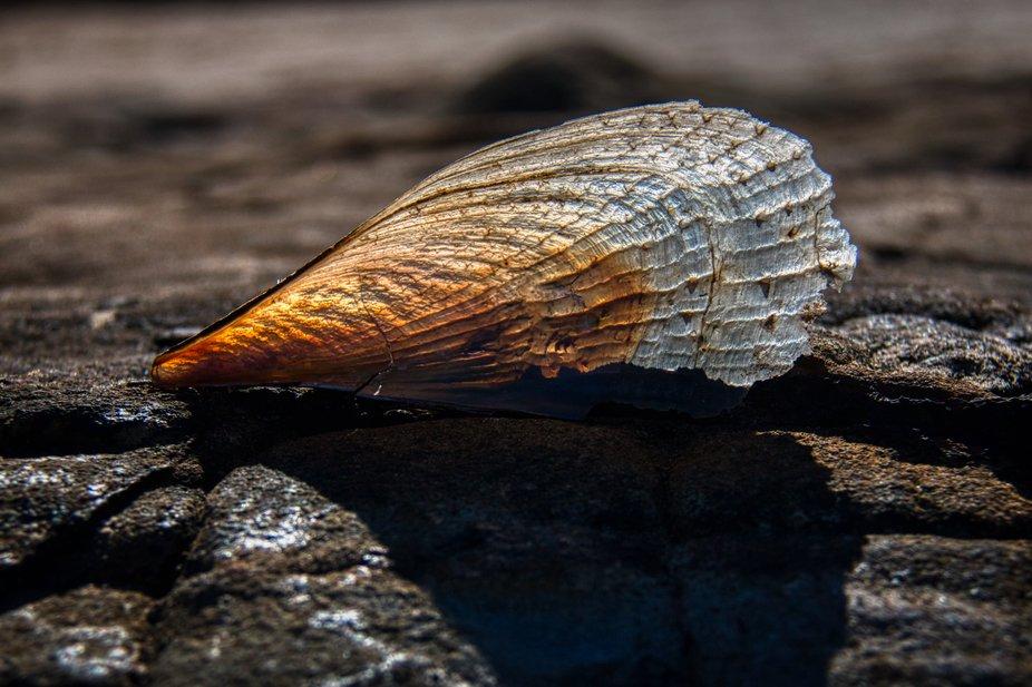 Shell on a rock.jpeg