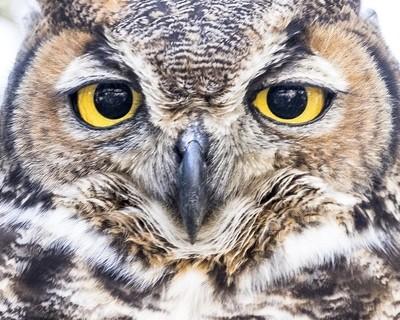 Wise Stare