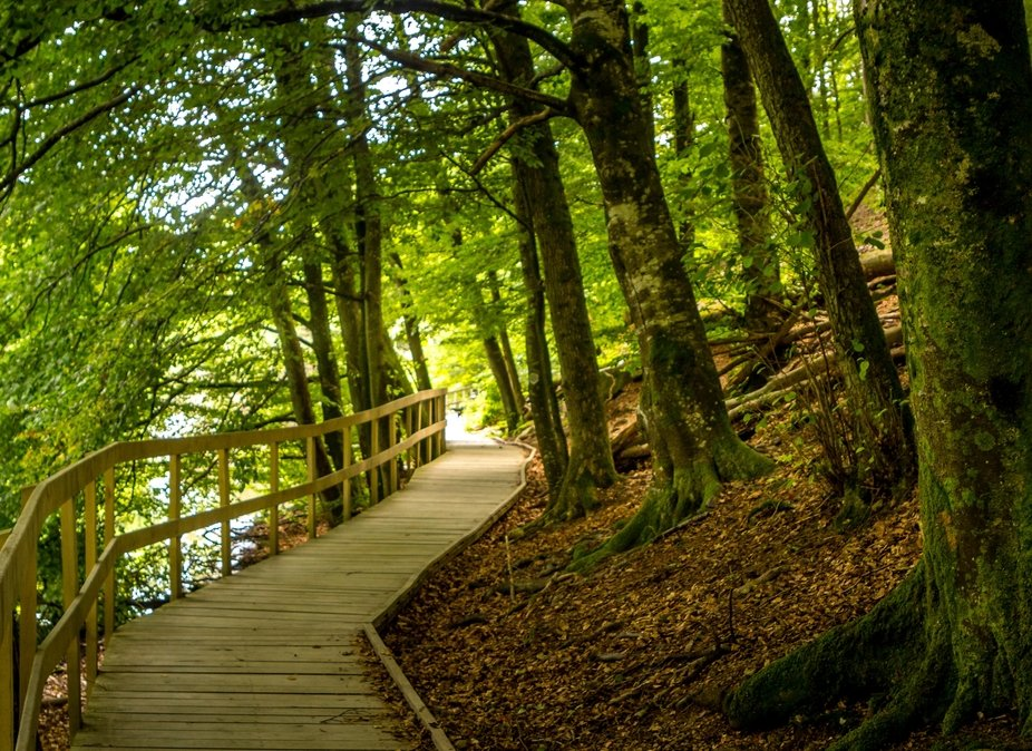 Footpath by the lake