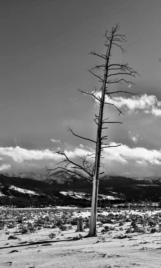 A lone tree high in the Rockies near the continental divide.