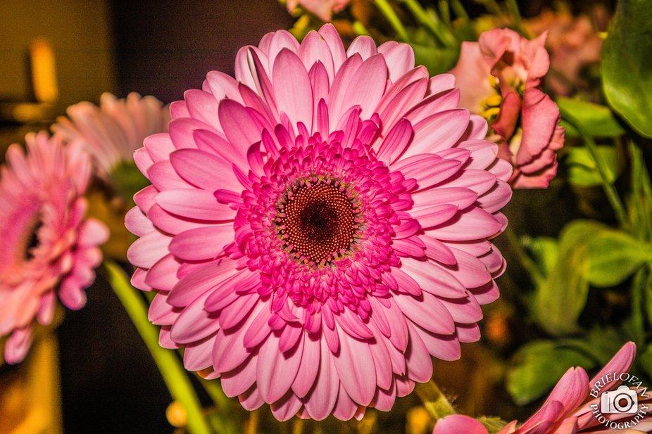 flower - hd-4366