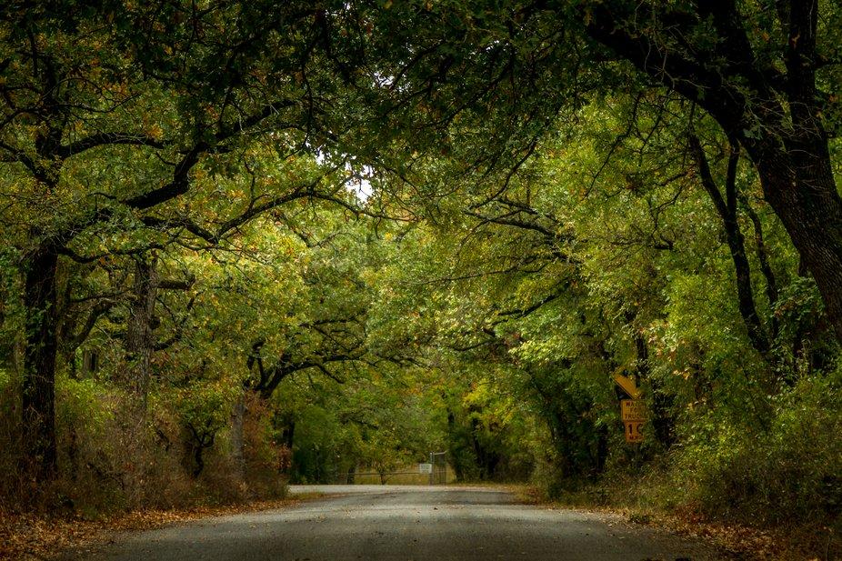 Shaded Roadway