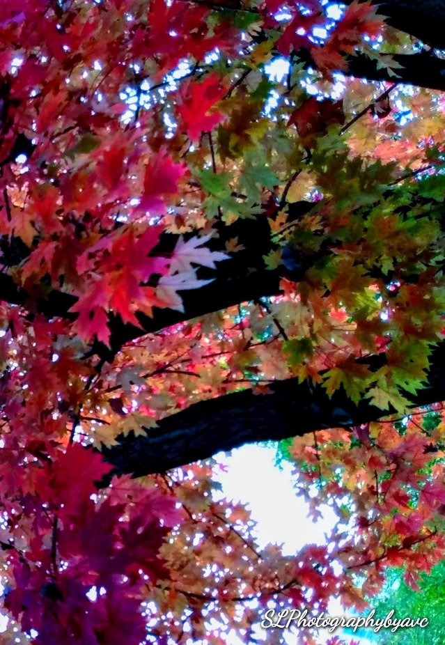 Bringing autumn to light, colors of the season, flowers, sunsets, & sunrises. Sky shots & trees captured by avc