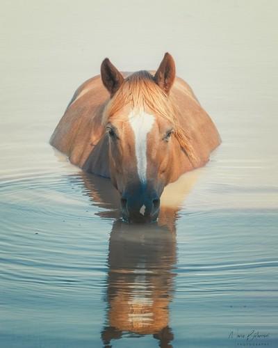Swimming Horse