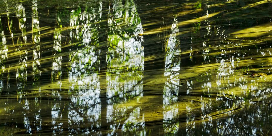 Reflections of trees and surface algae lit by splintered sunlight in the mirror calm waters of Gr...