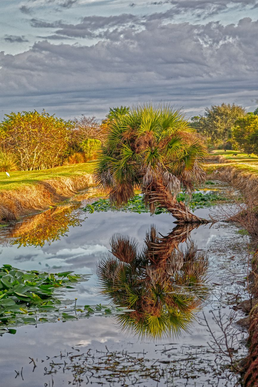 Winter landscape at Wakodatchee Wetlands in Florida.