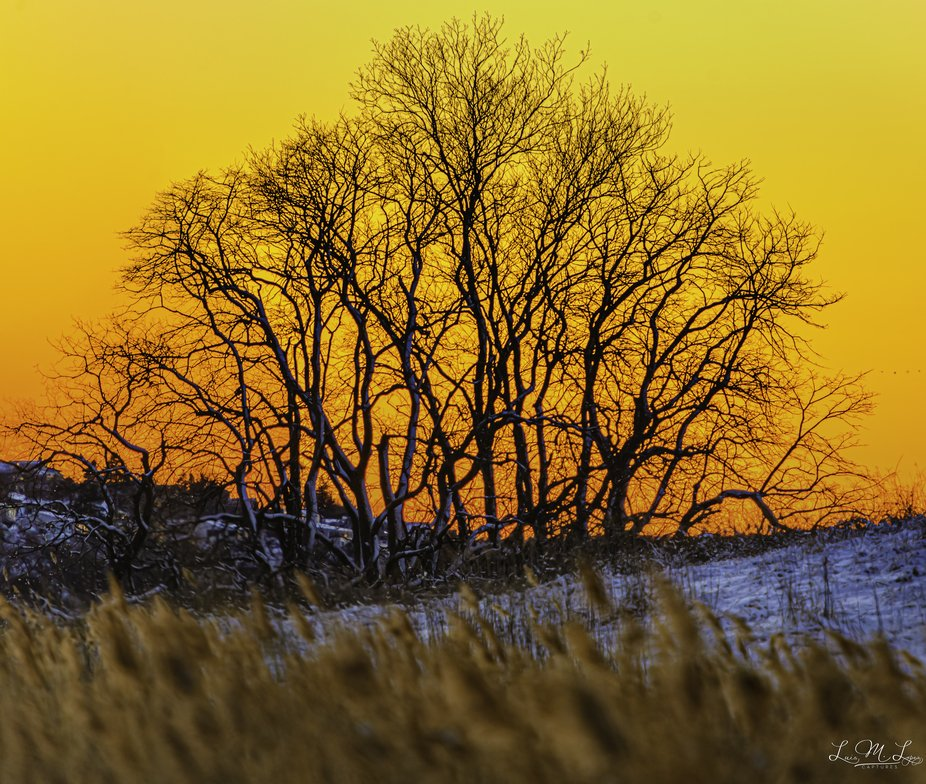 Golden Hour Tree Silhouette. Being Golden.