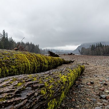 Some fallen trees rest here on the beach of the river