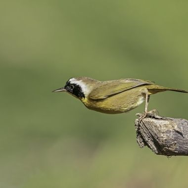 """Bird's definition of """"hanging out""""!"""