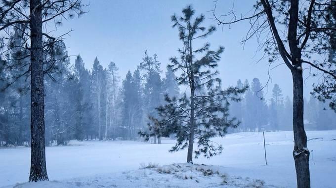 SNOWY, SNOWY NIGHT