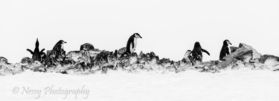 Rocks or Penguins