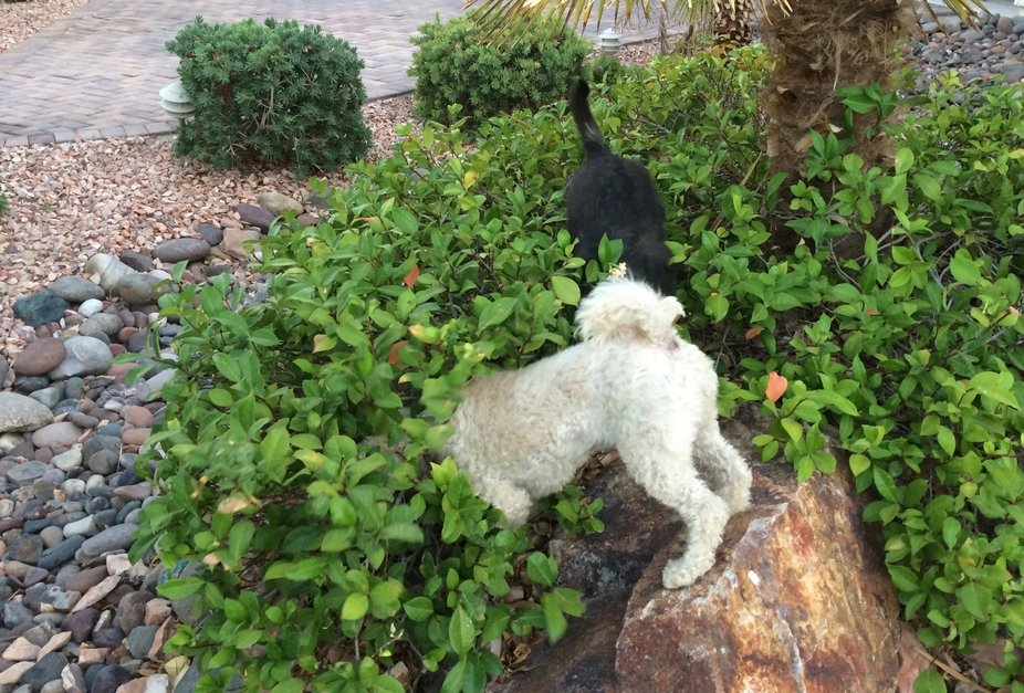 Cute photo of pups hunting for lizards