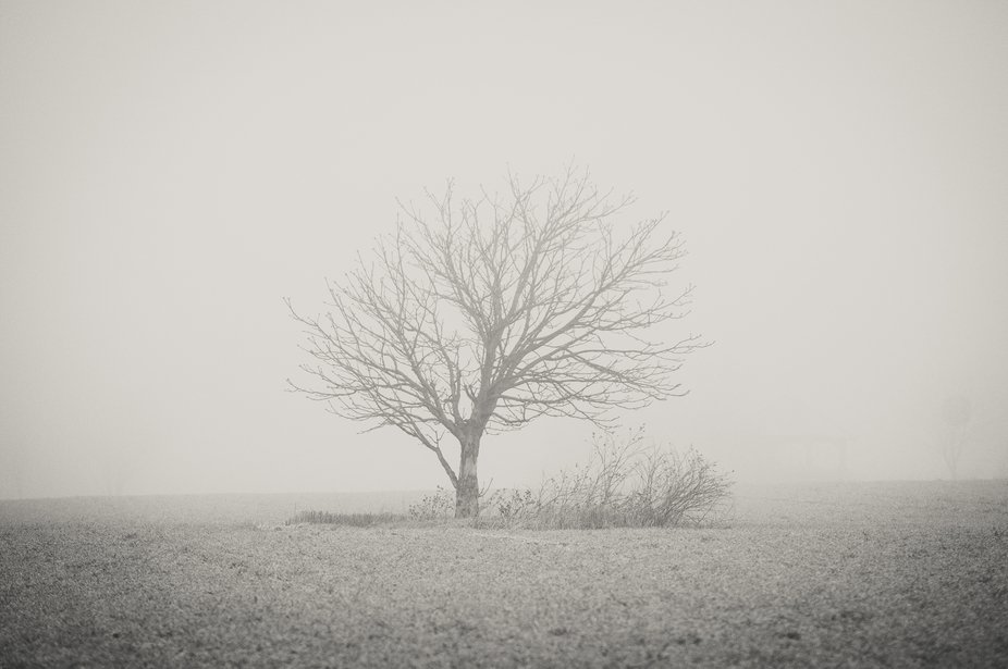 With fog settling over frosty ground, the world became beautfilly monochrome