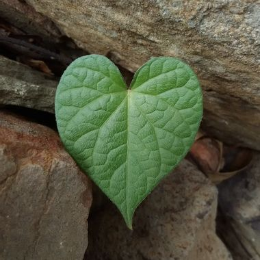 Green Heart in nature