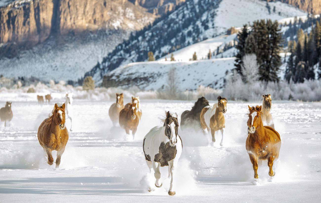 Capture Horses Photo Contest Winner