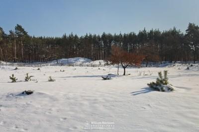 Autumn Tree In The Snow