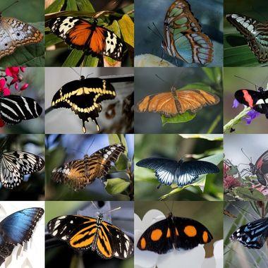 Butterfles