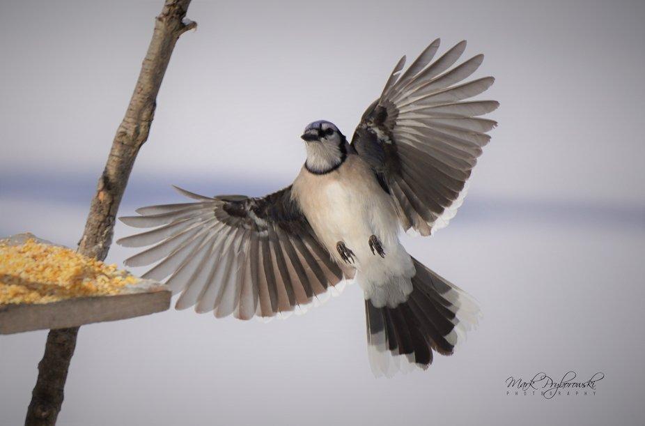 B.J. For landing