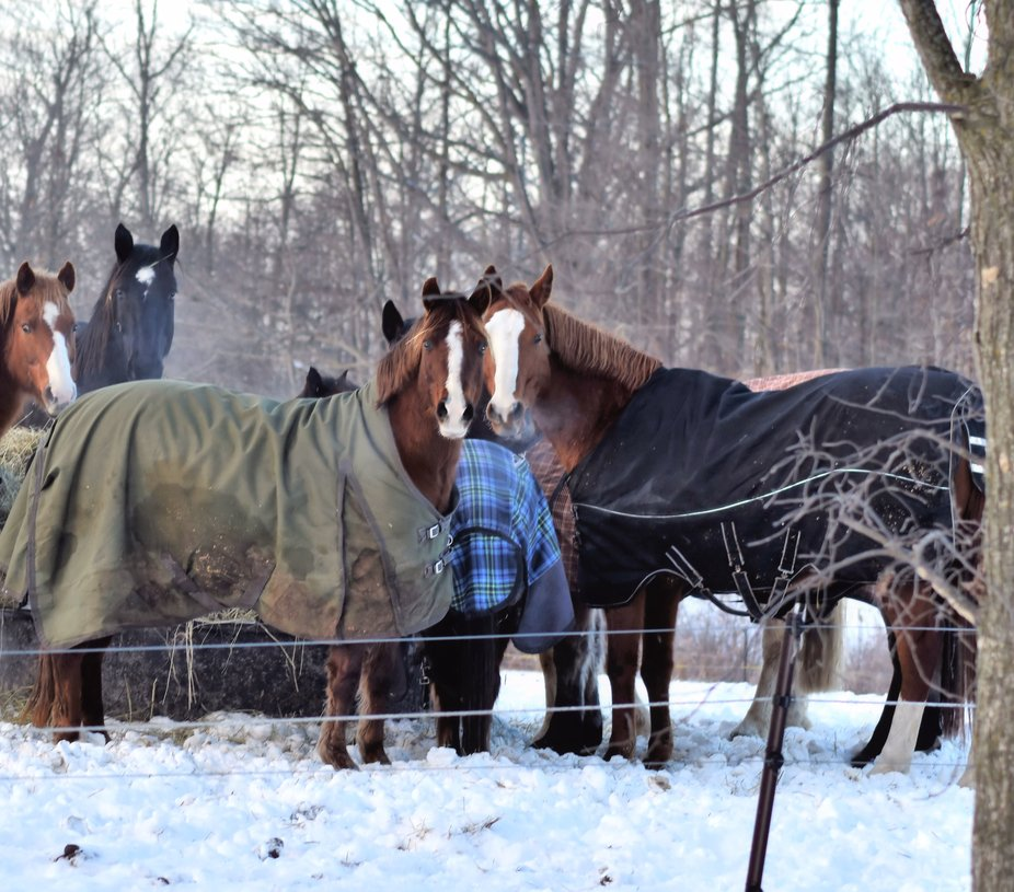 Horses hanging together as though chatting about the weather and the latest gossip!