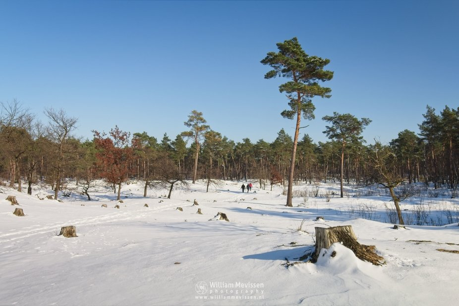 Hiking on a sunny winter morning in nature reserve Boshuizerbergen, Venray, Netherlands