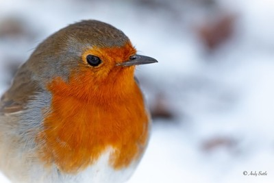 The Colours of a Robin