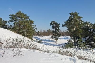 Sanddunes In The Snow