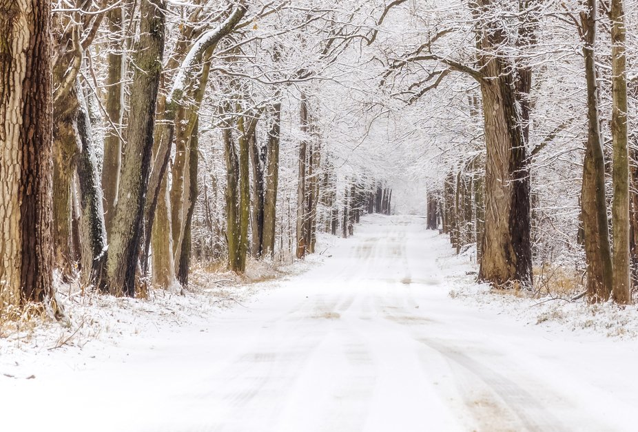 Wintry Tunnel of Trees