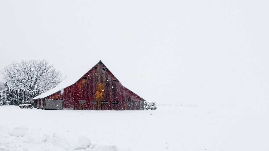 A rare snow storm in the Skagit Valley of Washington gives a completely different look and feel to this farm.
