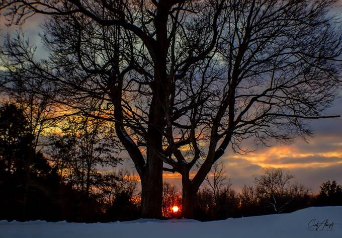 Two trees frame a doorway leading to the final view of the sunset on a mid February evening.