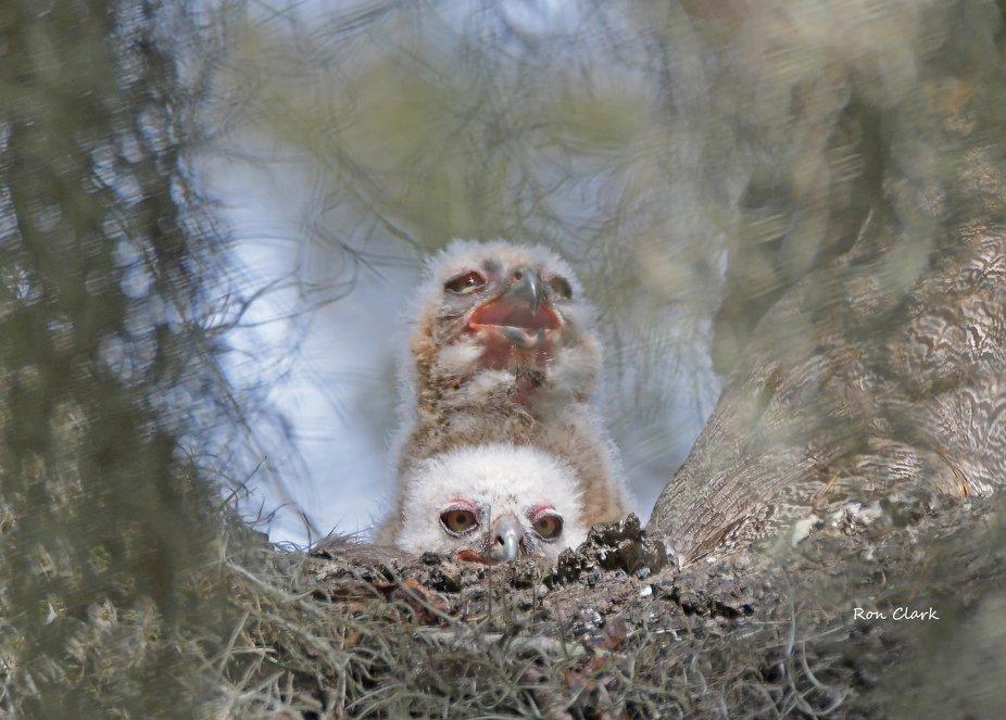 In their nest.