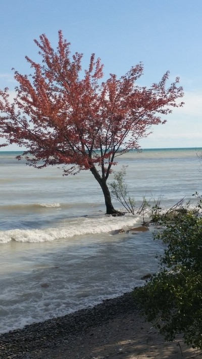 Tree by waters edges