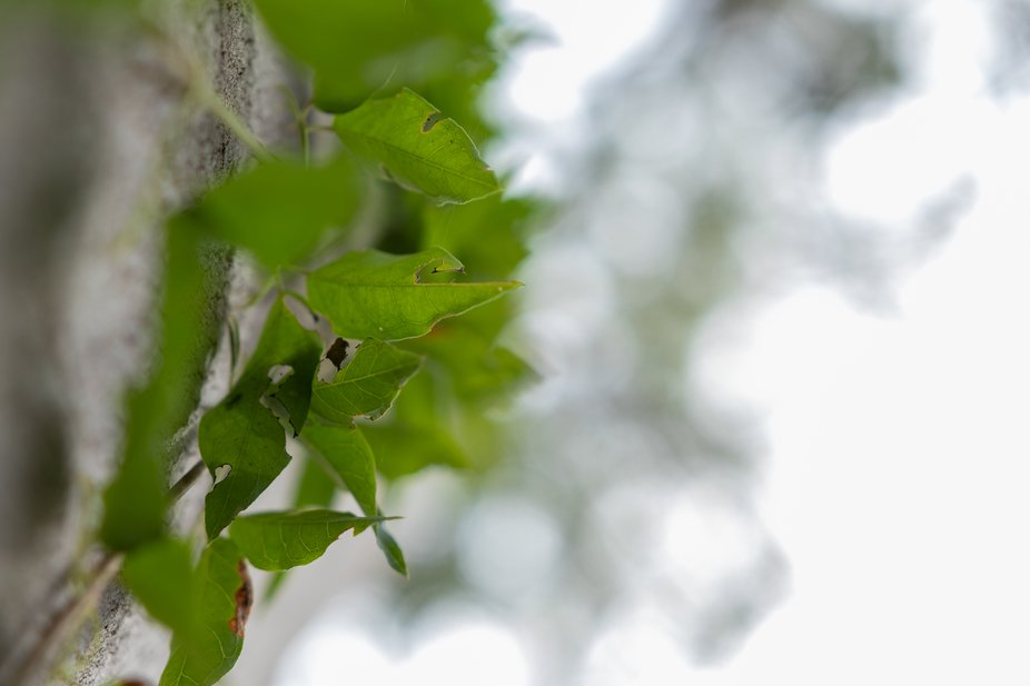 Images from Denmark Hill Conservation Reserve, this was my first visit to this location and glad ...