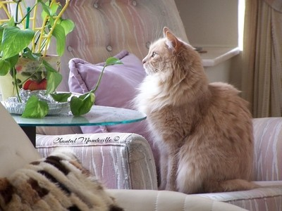 Watching the birds outside...