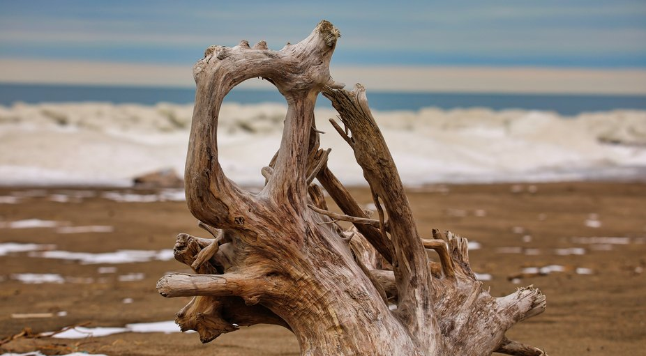 This is a large piece of driftwood that was on the beach of Lake Erie.