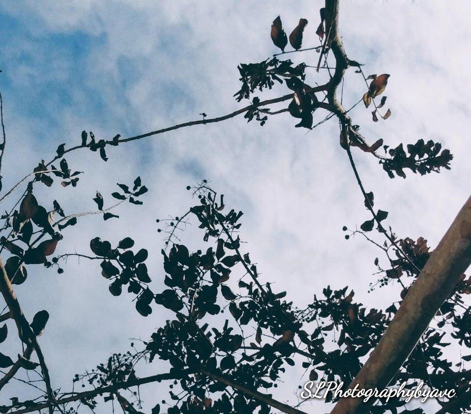 SkyLinePhotographybyavc